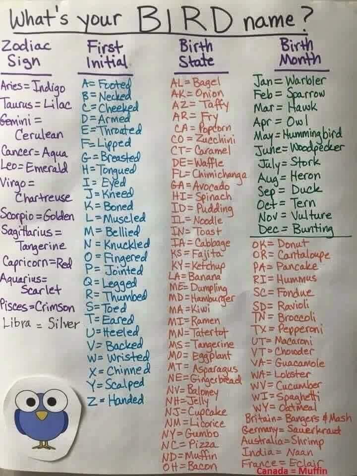 Text - What's your BIRD name ? Zodiac Sign First Initial Birth State Birth Month Jan=Warbler Feb = Sparrow Mar= Hawk Apr = Owl May = Humming bird June=Woodpecker Jaly= Stork AL Bagel AK=Onion AZ= Taffy AR=Fry CA= Popdorn Co = Zuechini CT= Caramel DE=Waffle FL= Chimichanga Aug= Heron GA= Avocado HI= Spinach ID= Pudding n-Noodle IN= Toast TA = Cabbage KS= Fajita KY=Kefchup LA=Banana ME Dumpling MD=Hamburger MA =Kiwi MI-Ramen MN=Tatertot MS=Tangerine UT= Macaroni MO= Eggplant MT Asparagus NE Ggerbi
