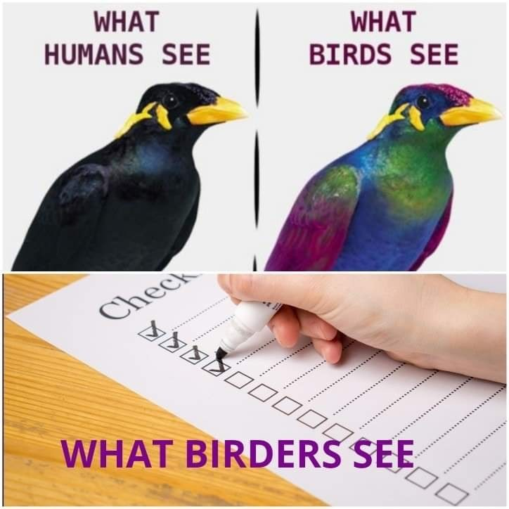 Bird - WHAT HUMANS SEE WHAT BIRDS SEE Check *............ ............ WHAT BIRDERS SEE 000008RE .........*