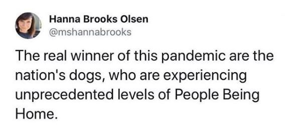 Text - Hanna Brooks Olsen @mshannabrooks The real winner of this pandemic are the nation's dogs, who are experiencing unprecedented levels of People Being Home.