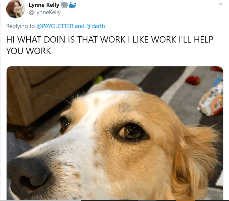 Dog - Lynne Kelly @Lynnekelly Replying to @PAYOLETTER and @darth HI WHAT DOIN IS THAT WORK I LIKE WORK I'LL HELP YOU WORK