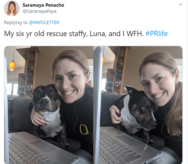 Dog - Saramaya Penacho @SaramayaFaye Replying to @PAYOLETTER My six yr old rescue staffy, Luna, and I WFH. #PRlife