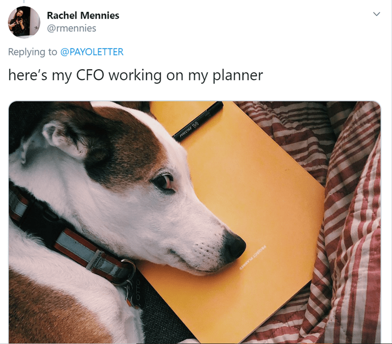 Dog - Rachel Mennies @rmennies Replying to @PAYOLETTER here's my CFO working on my planner PRECISE V PROJECT PLANNER OTTO