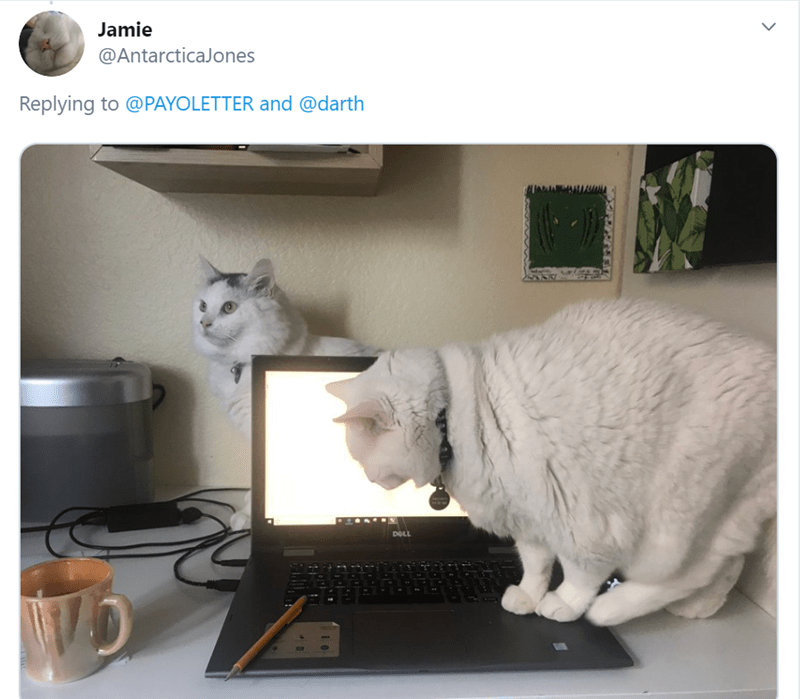 Cat - Jamie @AntarcticaJones Replying to @PAYOLETTER and @darth DELL