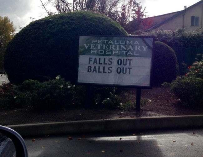 Sky - PETALUMA VETERINARY HOSPITAL FALLS OUT BALLS OUT