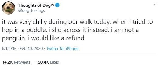 Text - Thoughts of Dog® @dog_feelings it was very chilly during our walk today. wheni tried to hop in a puddle. i slid across it instead. i am not a penguin. i would like a refund 6:35 PM Feb 10, 2020 · Twitter for iPhone 14.2K Retweets 150.4K Likes