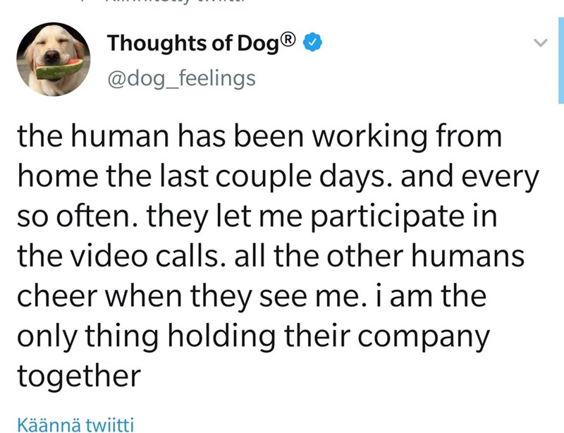 Text - Thoughts of Dog® O @dog_feelings the human has been working from home the last couple days. and every so often. they let me participate in the video calls. all the other humans cheer when they see me. i am the only thing holding their company together Käännä twiitti