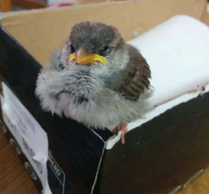 Bird - MERO