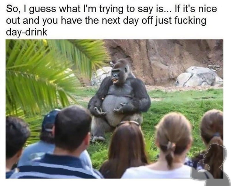 Primate - So, I guess what I'm trying to say is... If it's nice out and you have the next day off just fucking day-drink