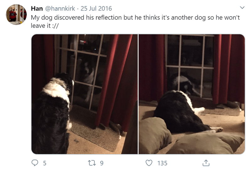 Text - Han @hannkirk · 25 Jul 2016 My dog discovered his reflection but he thinks it's another dog so he won't leave it :// 5 27 9 135
