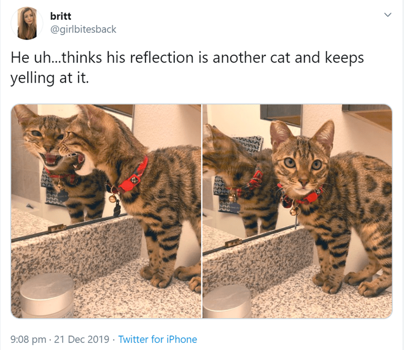 Cat - britt @girlbitesback He uh.thinks his reflection is another cat and keeps yelling at it. 9:08 pm · 21 Dec 2019 · Twitter for iPhone
