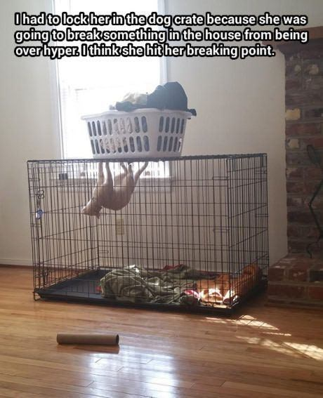 Cage - Ohad to lock herin the dog crate because she was going to break something in the house from being over hyper. Ithinkshe hit her breaking point.