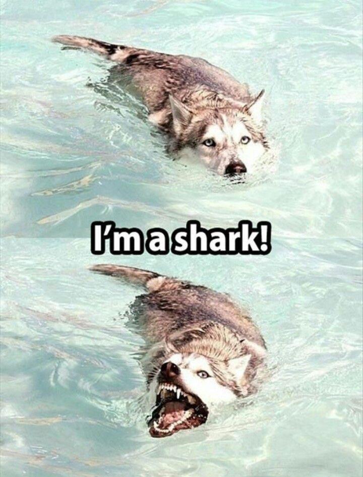 Wolf - Imashark!