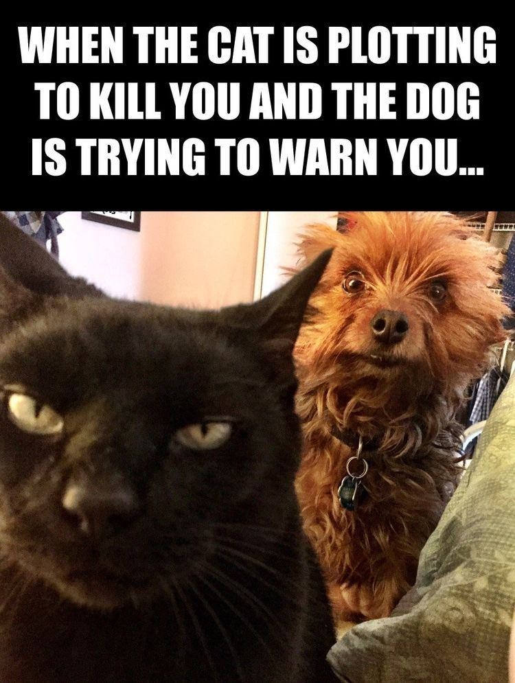 Cat - WHEN THE CAT IS PLOTTING TO KILL YOU AND THE DOG IS TRYING TO WARN YOU.