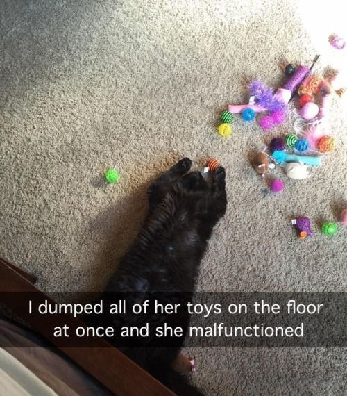 Cat - I dumped all of her toys on the floor at once and she malfunctioned