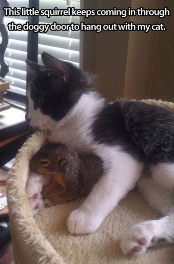 Cat - This little squirrel keeps coming in through the doggy doorto hang out with my cat.
