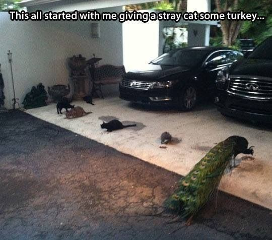 Floor - This all started with me givinga stray cat some turkey...