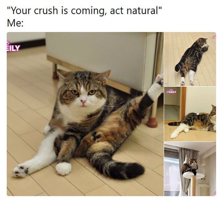 """Cat - """"Your crush is coming, act natural"""" Me: EILY PAEILY"""