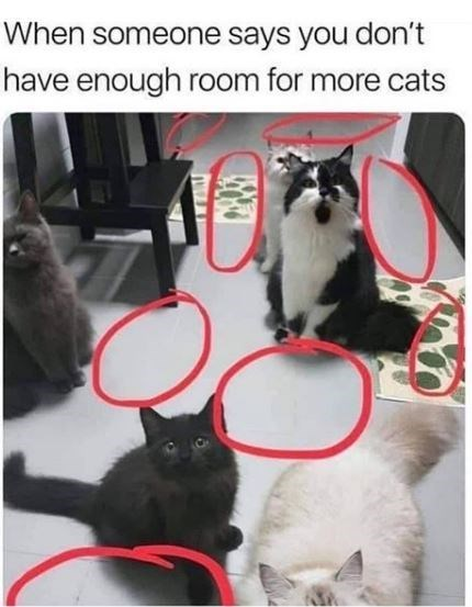 Cat - When someone says you don't have enough room for more cats