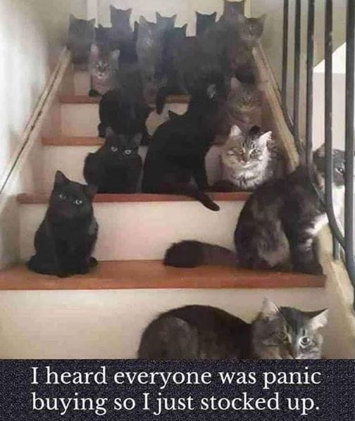 Cat - I heard everyone was panic buying so I just stocked up.