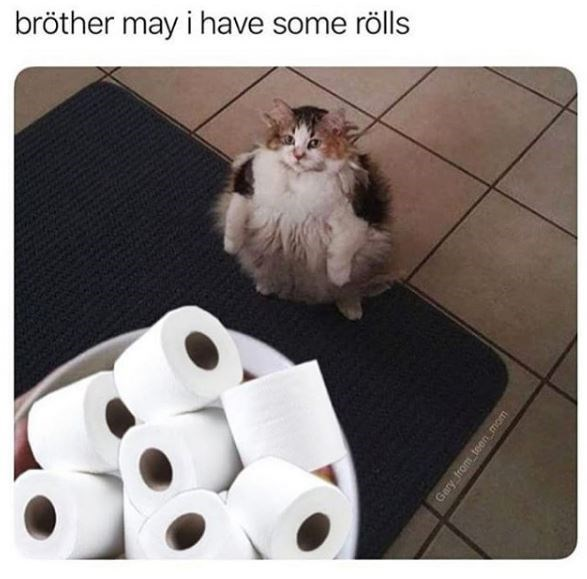 Cat - bröther may i have some rölls Gary from teen mom