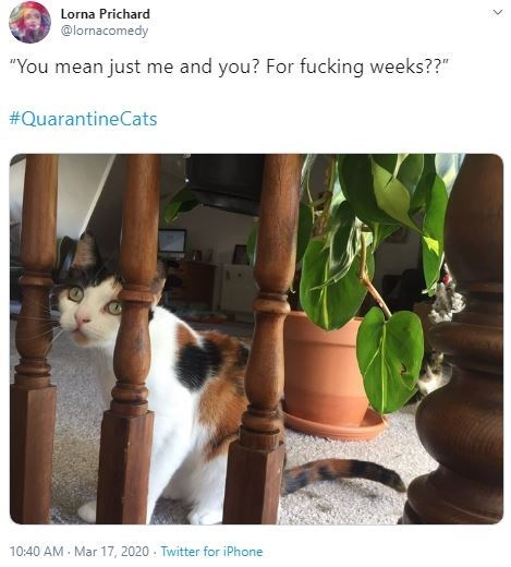 "Cat - Lorna Prichard @lornacomedy ""You mean just me and you? For fucking weeks??"" #QuarantineCats 10:40 AM - Mar 17, 2020 - Twitter for iPhone"