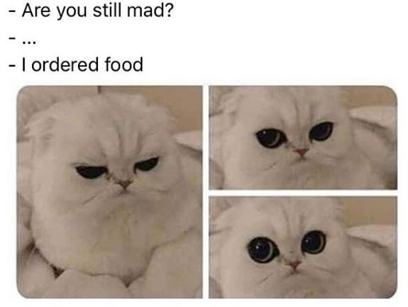Cat - Are you still mad? - I ordered food