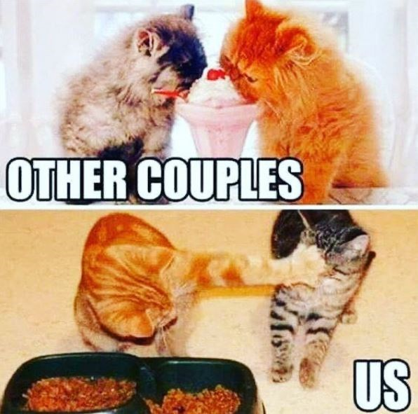 Cat - OTHER COUPLES US