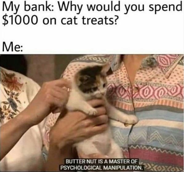 Cat - My bank: Why would you spend $1000 on cat treats? Me: BUTTER NUT IS A MASTER OF PSYCHOLOGICAL MANIPULATION.