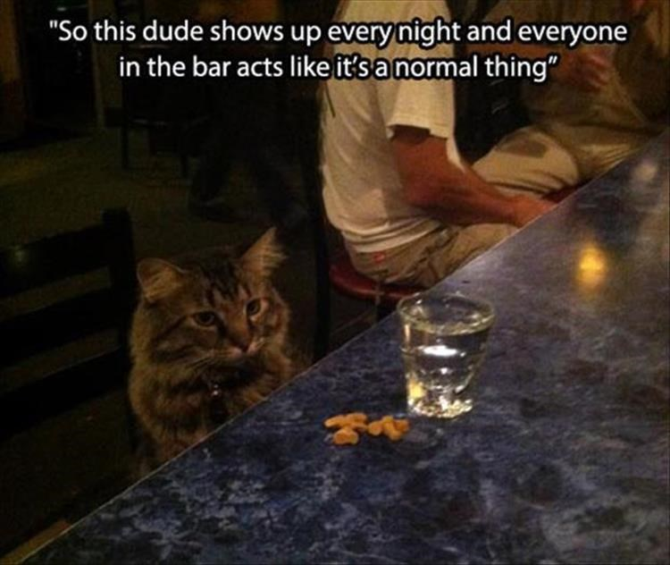 "Cat - ""So this dude shows up every night and everyone in the bar acts like it's a normal thing"""