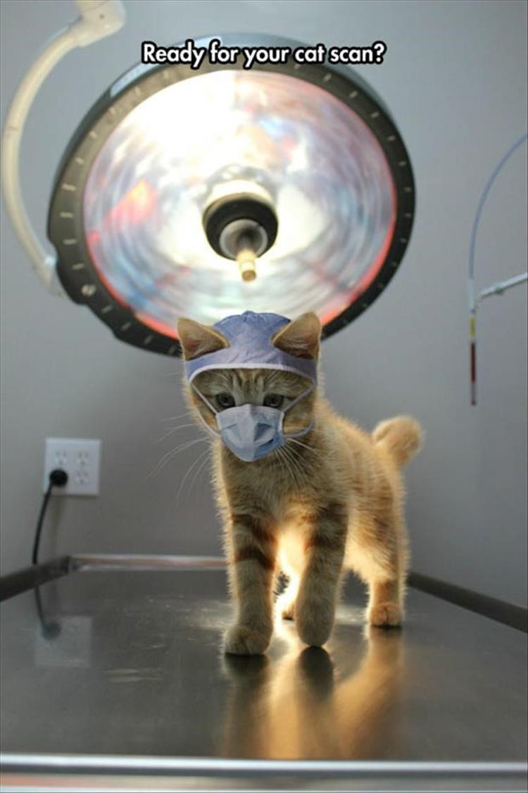 Cat - Ready for your cat scan?