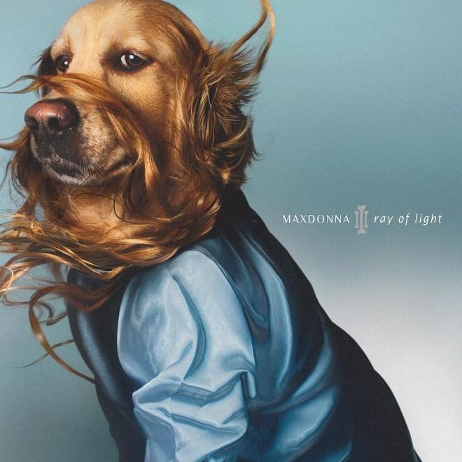 Dog - MAXDONNA ray of light