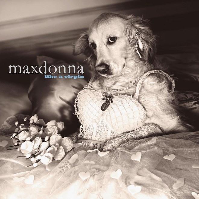 Dog - maxdonna like a virgin