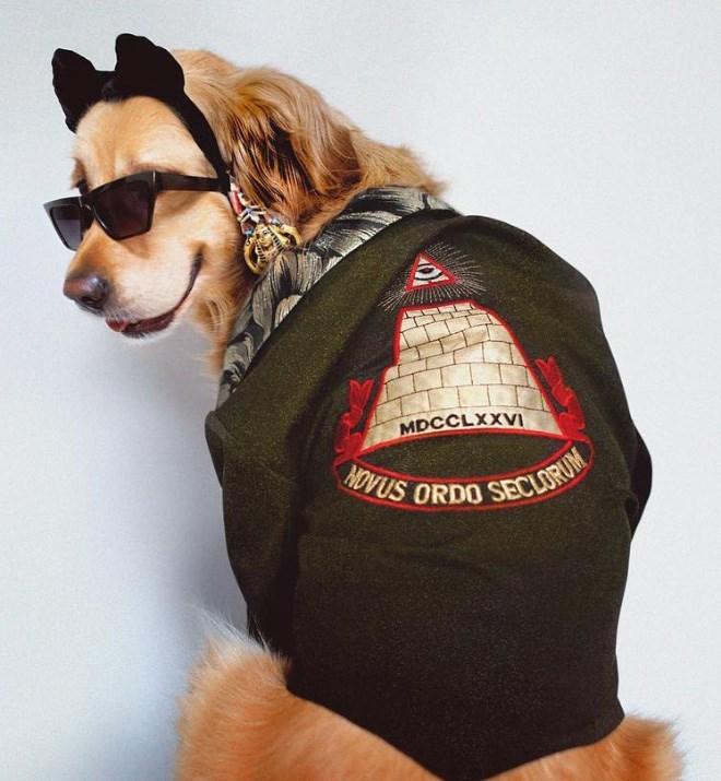 Dog clothes - MDCCLXXVI HOVUS ORDO SECLORUM