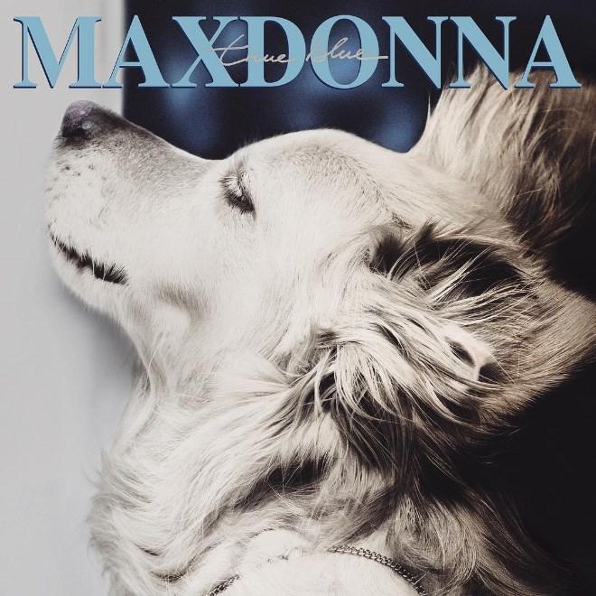 Dog - MAXDONNA