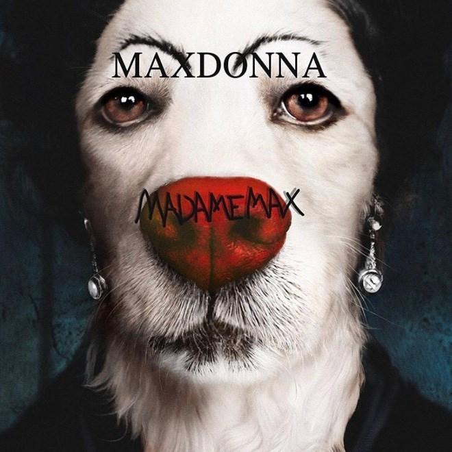 Face - MAXDONNA MADAMEMAX