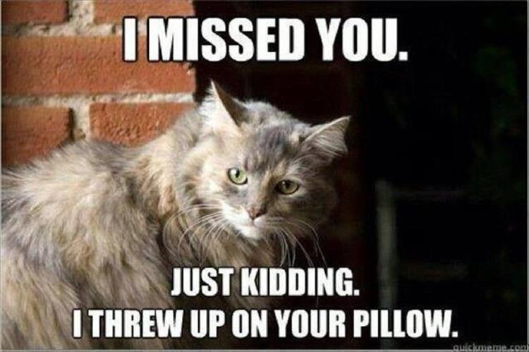 Cat - Cat - I MISSED YOU. JUST KIDDING. I THREW UP ON YOUR PILLOW. quickmeme.con