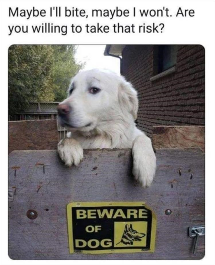 Dog - Maybe l'll bite, maybe I won't. Are you willing to take that risk? BEWARE OF DOG