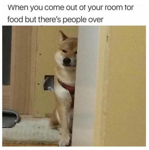 Mammal - When you come out of your room tor food but there's people over