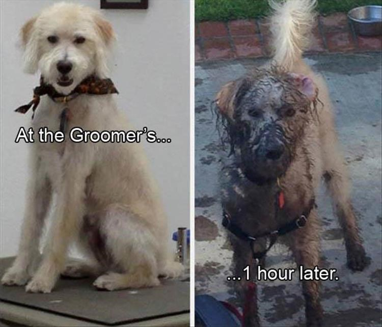 Dog - At the Groomer's.. ..1 hour later.