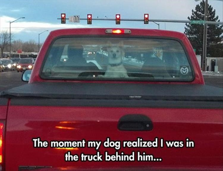 Land vehicle - The moment my dog realized I was in the truck behind him...