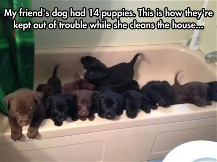 Dog - My friend's dog had 14 puppies. This is how they're kept out of trouble while she deans the house.