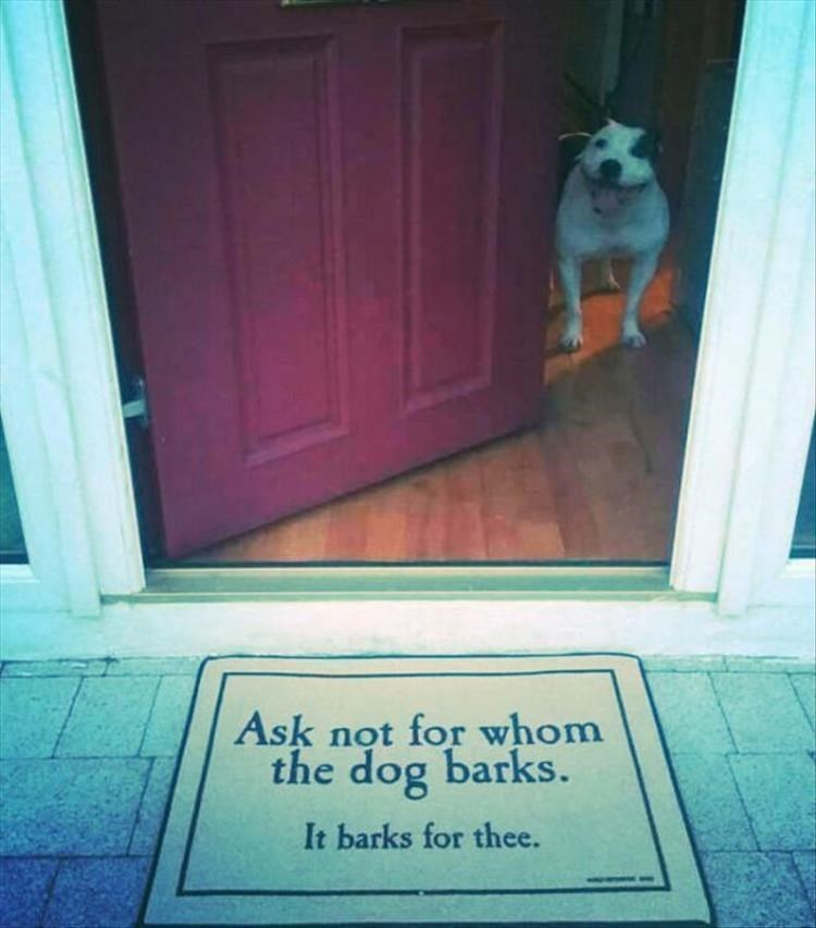Text - Ask not for whom the dog barks. It barks for thee.