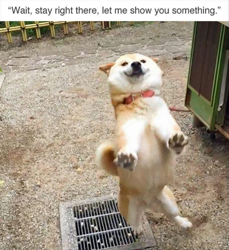 """Dog - """"Wait, stay right there, let me show you something."""" TARIALING"""