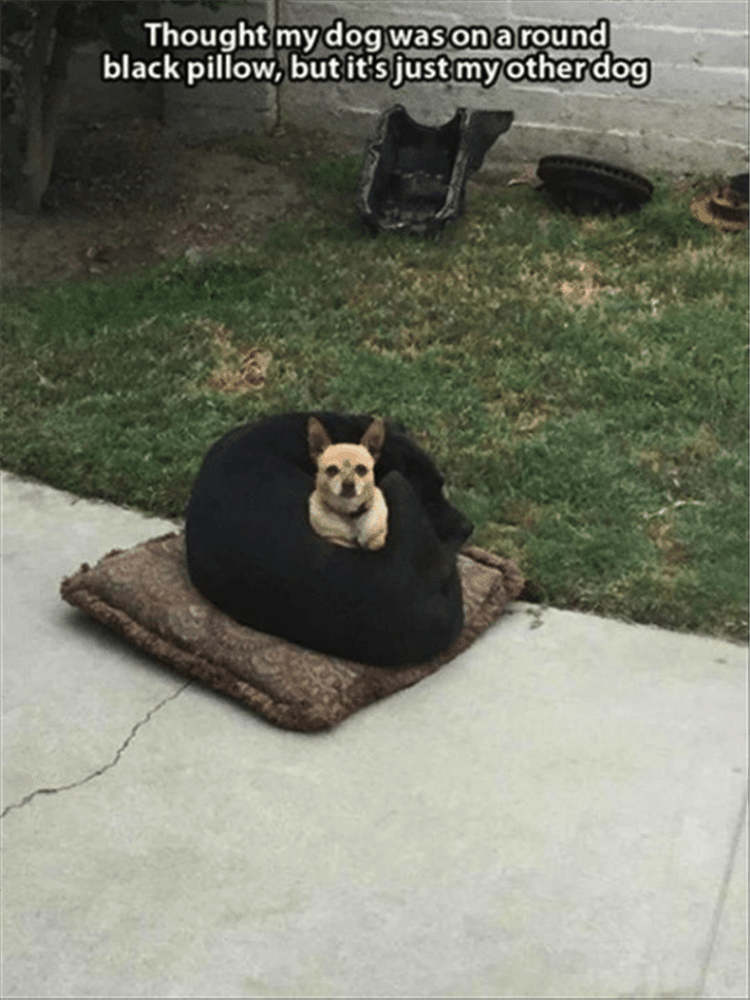 Grass - Thought my dog was on a round black pillow, but it's just my otherdog