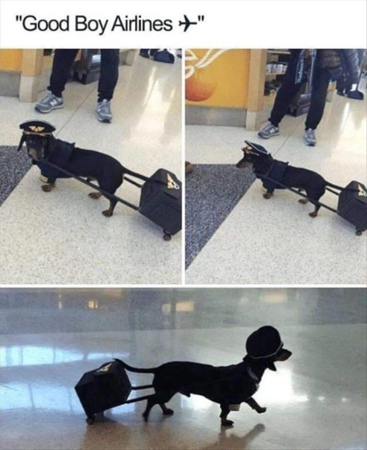 "Dog - ""Good Boy Airlines +"""