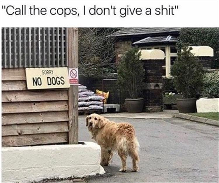 """Dog - """"Call the cops, l don't give a shit"""" SORRY NO DOGS"""