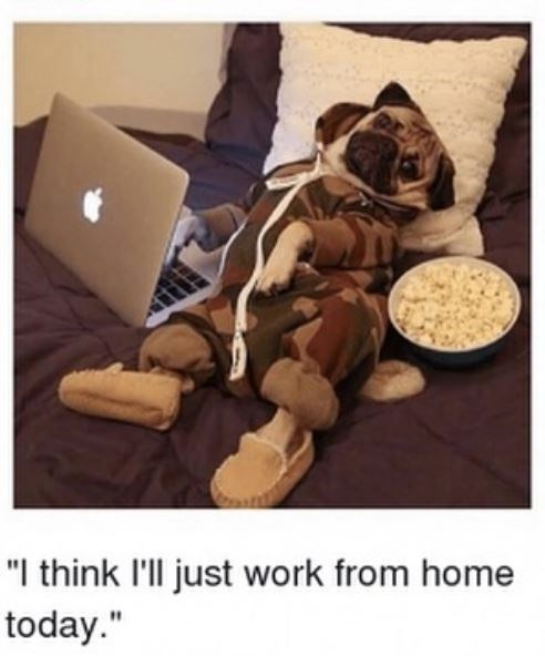 """Puppy - """"I think I'll just work from home today."""""""