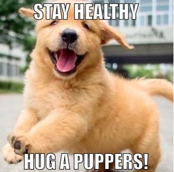 Dog breed - STAY HEALTHY HUG A PUPPERS!