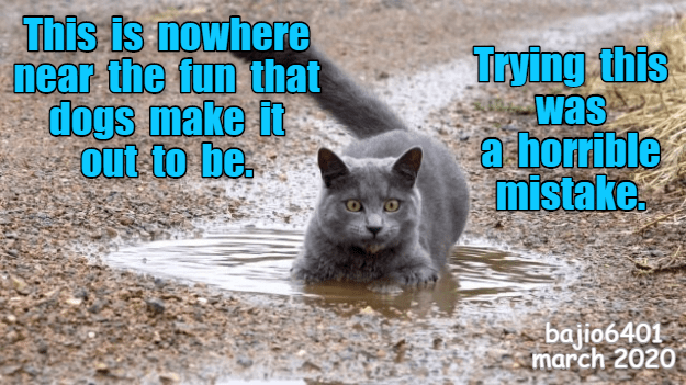 Cat - Photo caption - This is nowhere near the fun that dogs make it out to be. Trying this was a horrible mistake bajio6401 march 2020