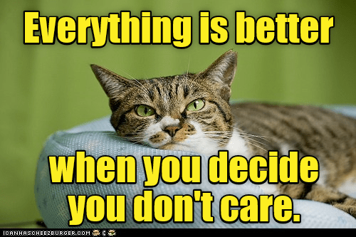 Cat - Cat - Everything is better when you decide you don't care ICANHASCHEEZBURGER.COM G